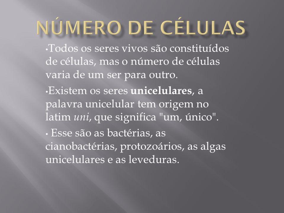 Número de células Todos os seres vivos são constituídos de células, mas o número de células varia de um ser para outro.