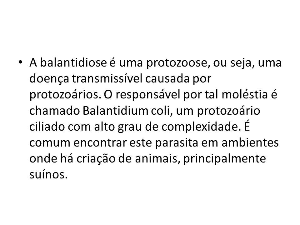 A balantidiose é uma protozoose, ou seja, uma doença transmissível causada por protozoários.