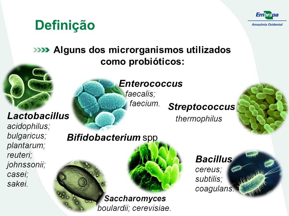 Alguns dos microrganismos utilizados como probióticos: