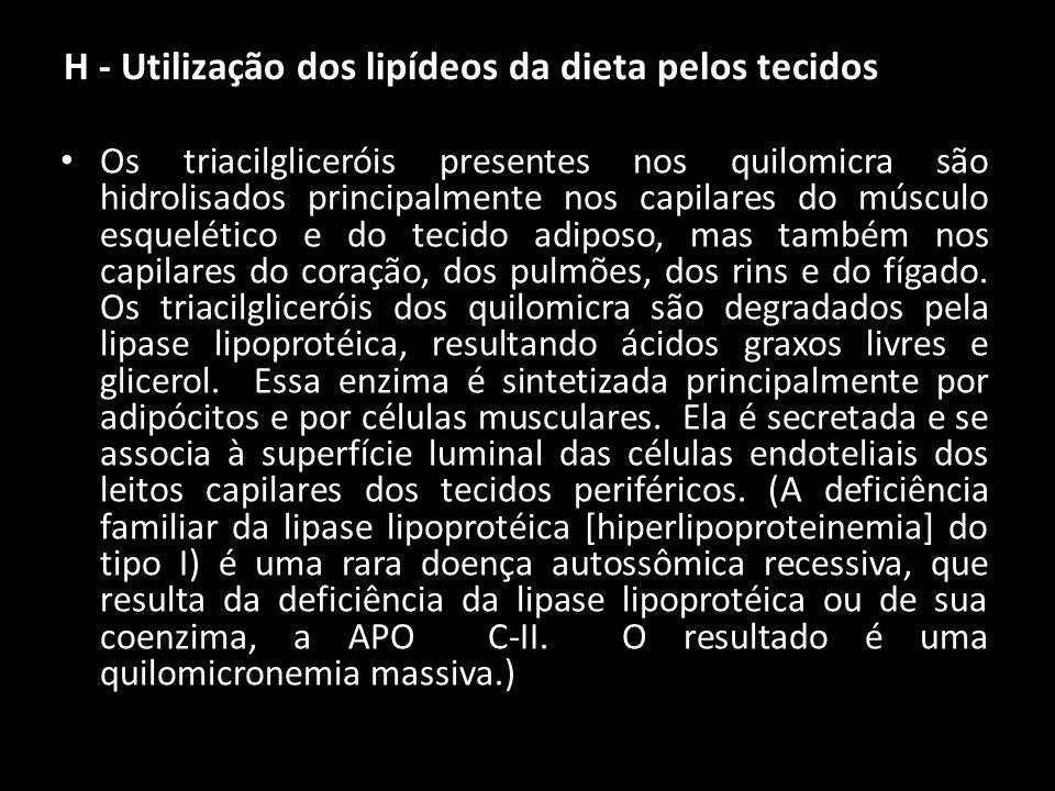 H - Utilização dos lipídeos da dieta pelos tecidos
