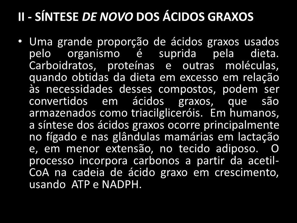 II - SÍNTESE DE NOVO DOS ÁCIDOS GRAXOS