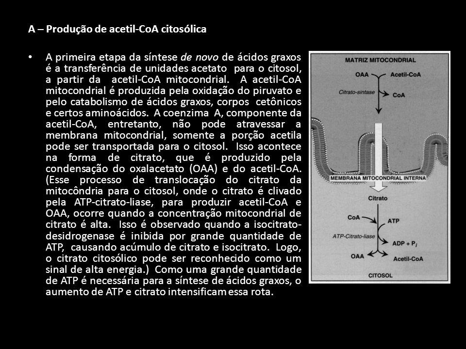 A – Produção de acetil-CoA citosólica