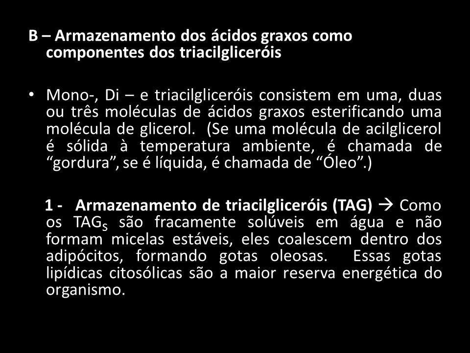 B – Armazenamento dos ácidos graxos como componentes dos triacilgliceróis