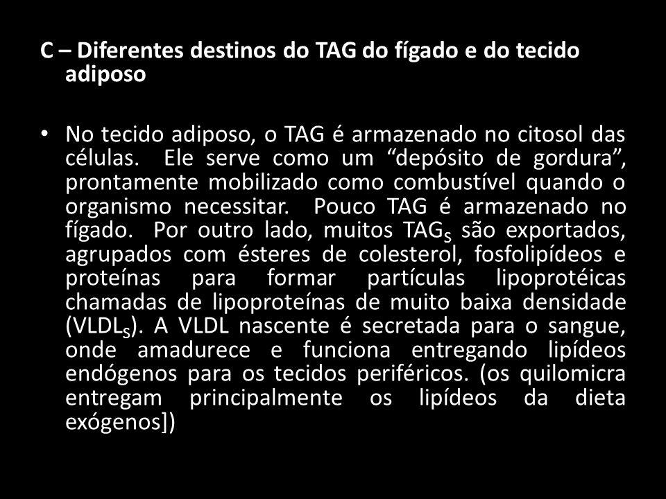 C – Diferentes destinos do TAG do fígado e do tecido adiposo