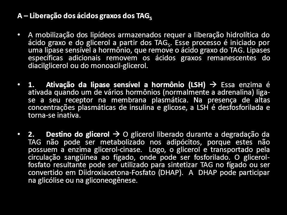 A – Liberação dos ácidos graxos dos TAGS