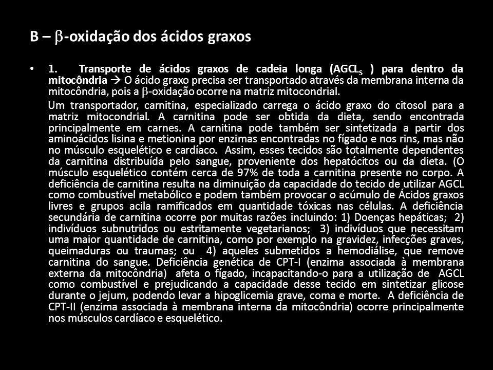 B – -oxidação dos ácidos graxos