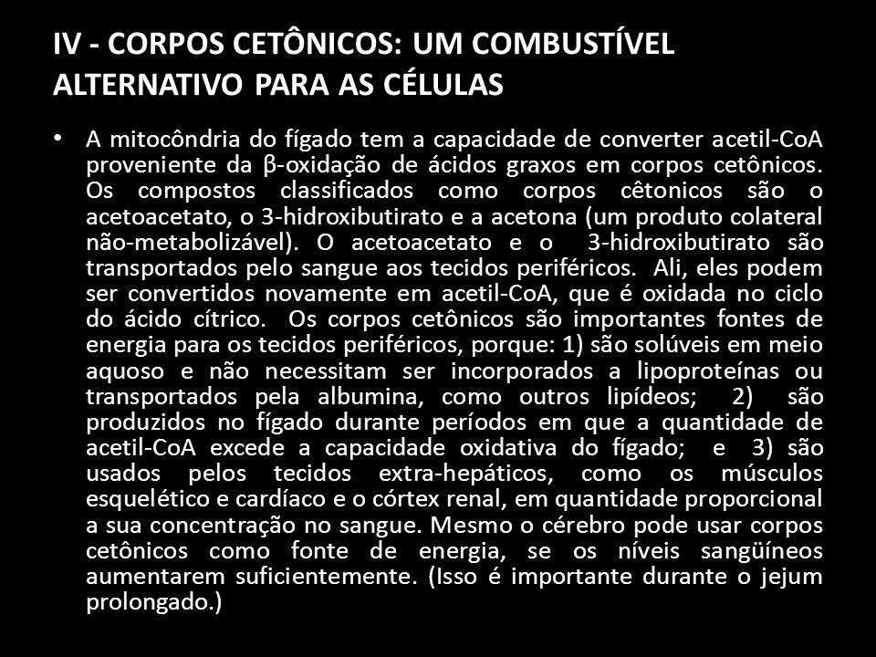 IV - CORPOS CETÔNICOS: UM COMBUSTÍVEL ALTERNATIVO PARA AS CÉLULAS