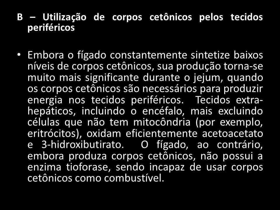 B – Utilização de corpos cetônicos pelos tecidos periféricos