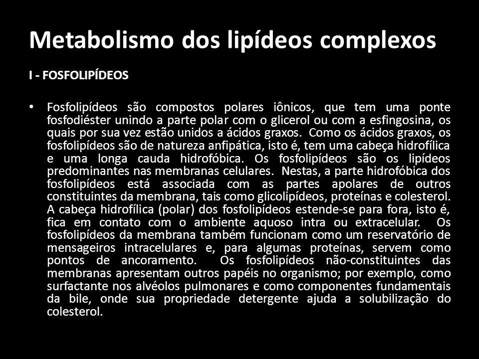 Metabolismo dos lipídeos complexos