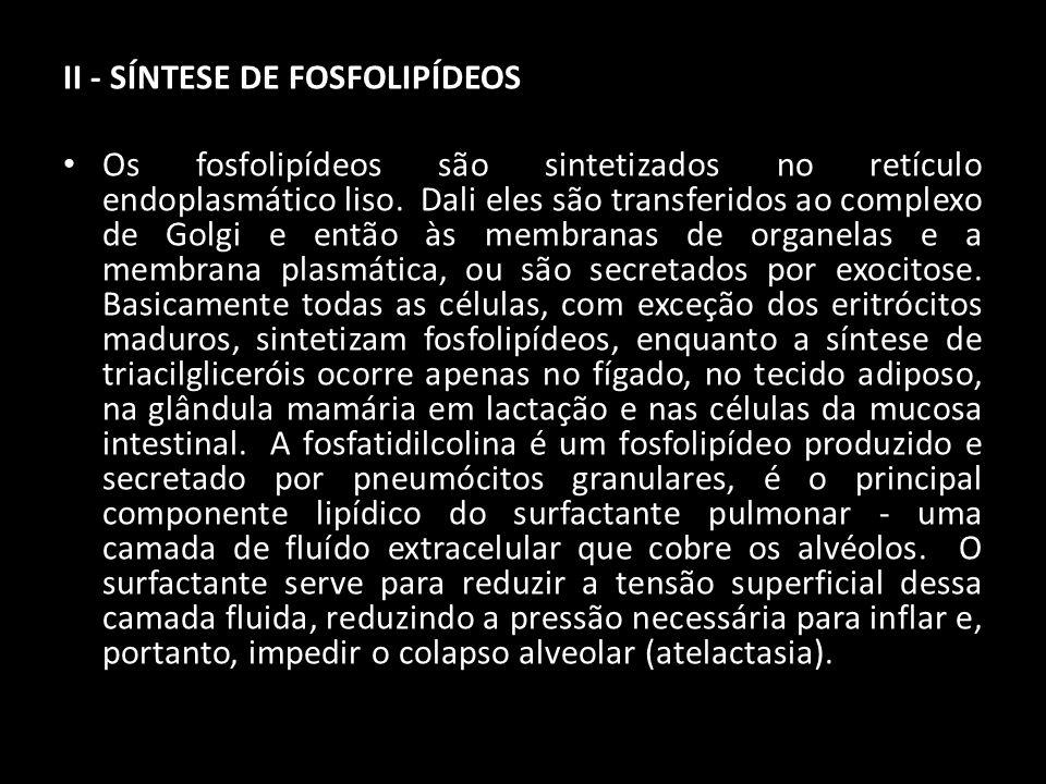 II - SÍNTESE DE FOSFOLIPÍDEOS