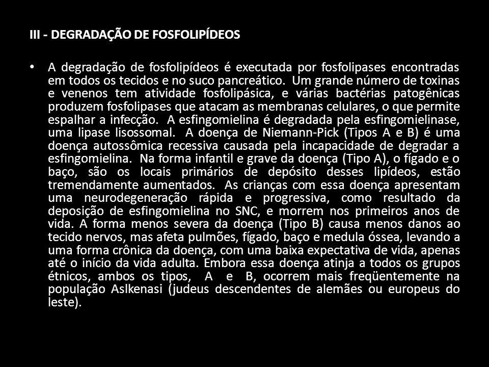 III - DEGRADAÇÃO DE FOSFOLIPÍDEOS