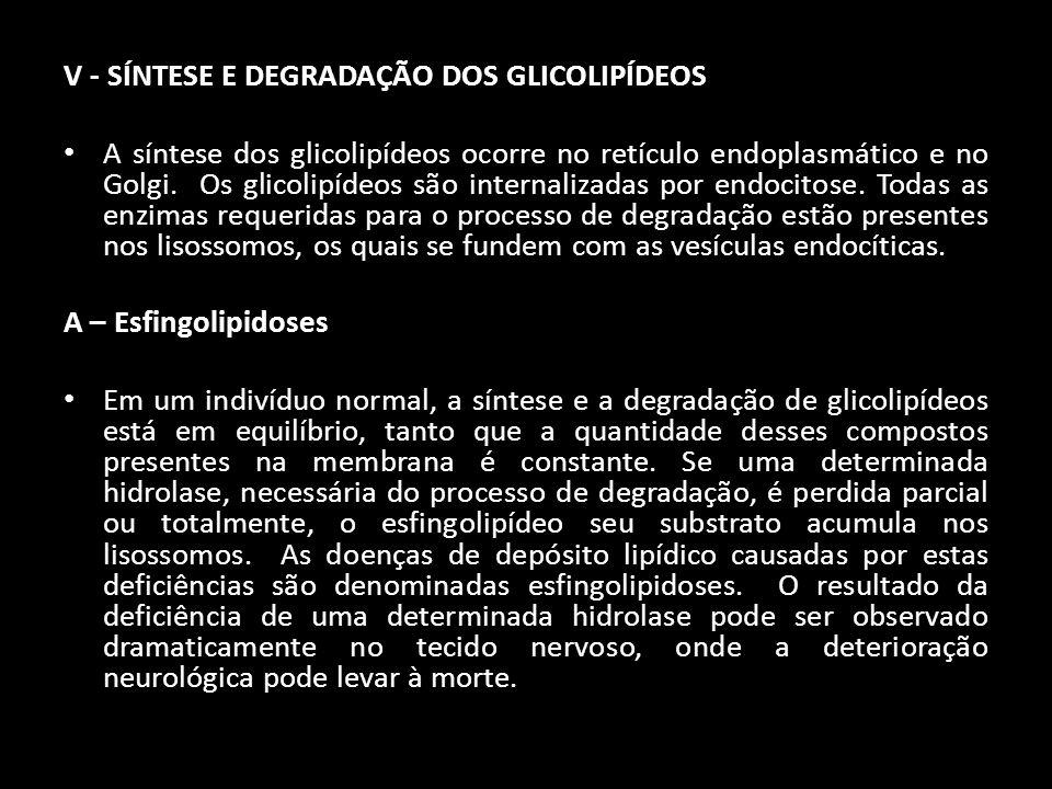 V - SÍNTESE E DEGRADAÇÃO DOS GLICOLIPÍDEOS