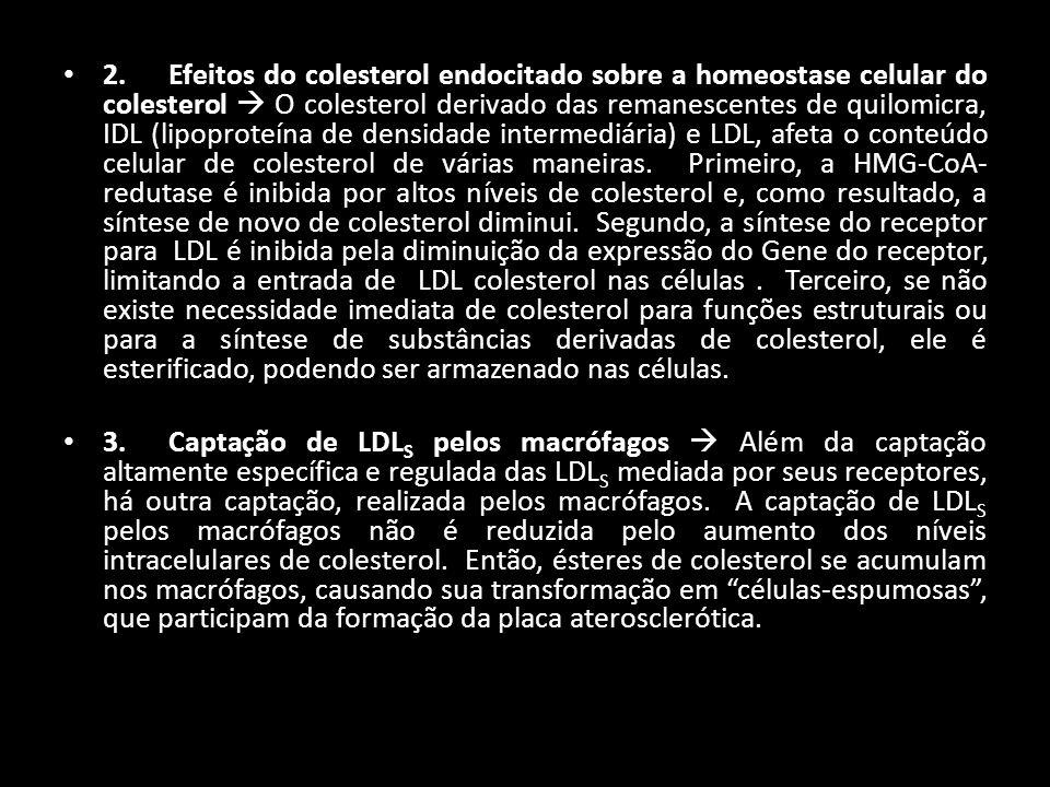 2. Efeitos do colesterol endocitado sobre a homeostase celular do colesterol  O colesterol derivado das remanescentes de quilomicra, IDL (lipoproteína de densidade intermediária) e LDL, afeta o conteúdo celular de colesterol de várias maneiras. Primeiro, a HMG-CoA-redutase é inibida por altos níveis de colesterol e, como resultado, a síntese de novo de colesterol diminui. Segundo, a síntese do receptor para LDL é inibida pela diminuição da expressão do Gene do receptor, limitando a entrada de LDL colesterol nas células . Terceiro, se não existe necessidade imediata de colesterol para funções estruturais ou para a síntese de substâncias derivadas de colesterol, ele é esterificado, podendo ser armazenado nas células.