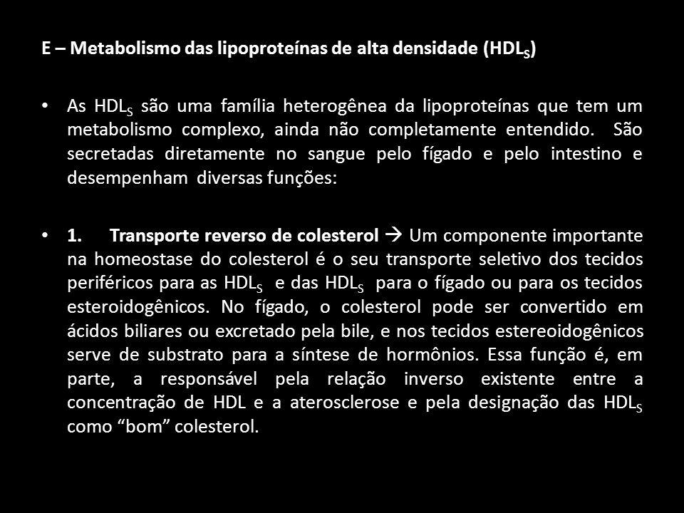 E – Metabolismo das lipoproteínas de alta densidade (HDLS)