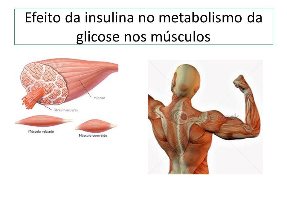Efeito da insulina no metabolismo da glicose nos músculos