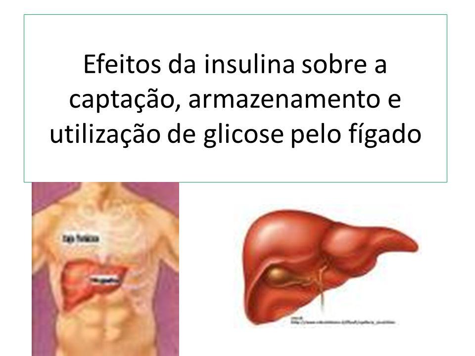 Efeitos da insulina sobre a captação, armazenamento e utilização de glicose pelo fígado