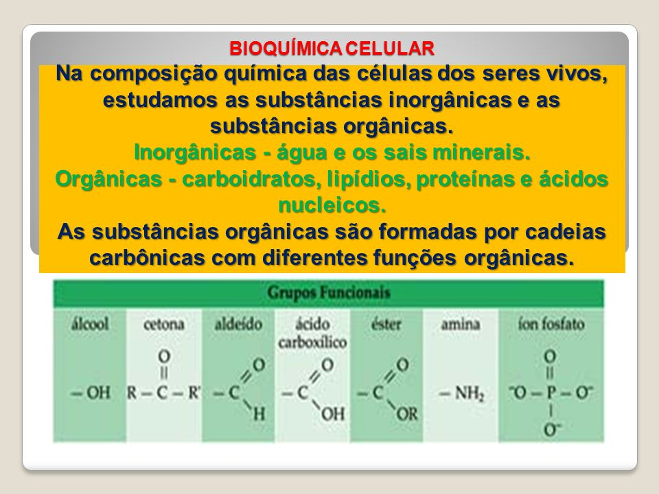 BIOQUÍMICA CELULAR Na composição química das células dos seres vivos, estudamos as substâncias inorgânicas e as substâncias orgânicas.
