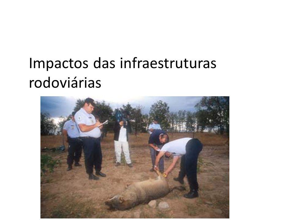 Impactos das infraestruturas rodoviárias