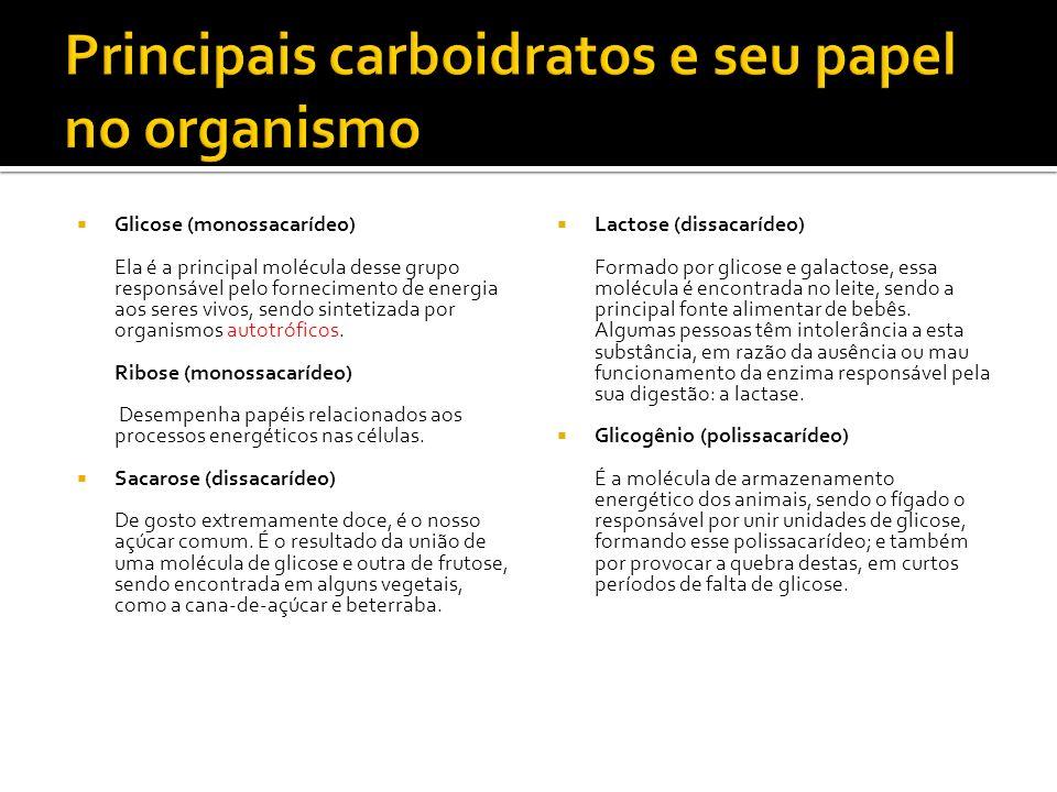 Principais carboidratos e seu papel no organismo