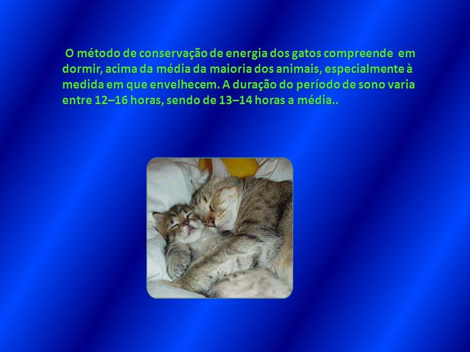 O método de conservação de energia dos gatos compreende em dormir, acima da média da maioria dos animais, especialmente à medida em que envelhecem.