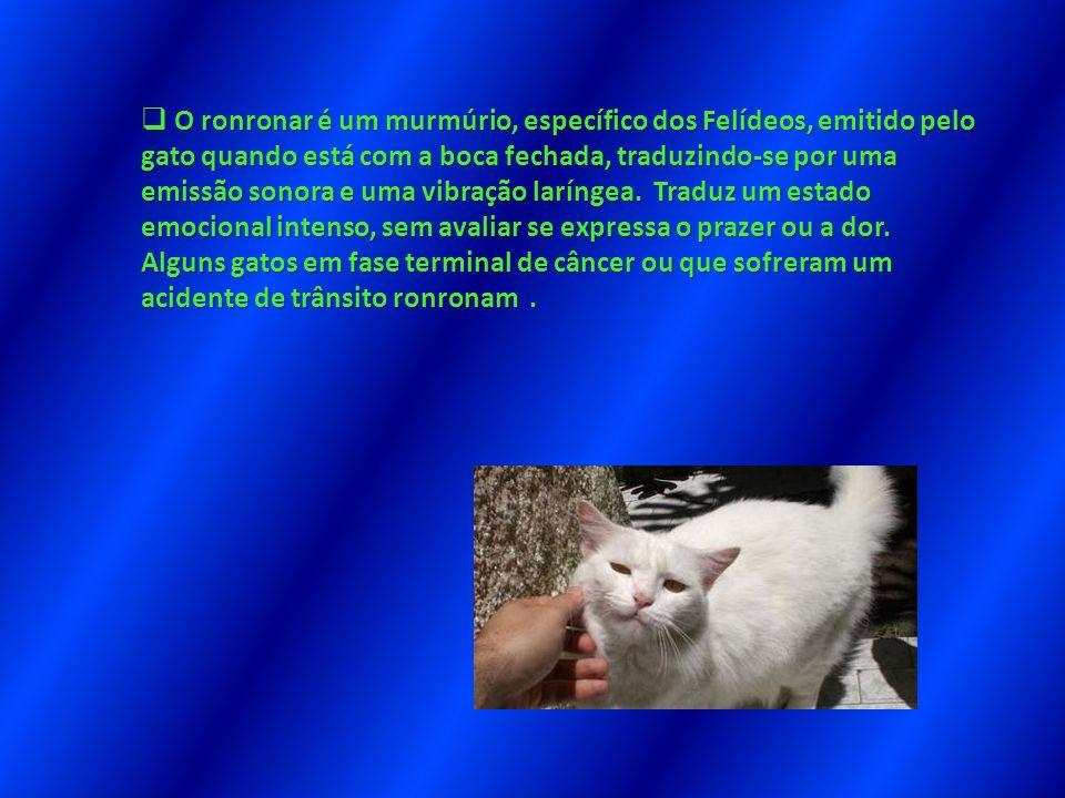 O ronronar é um murmúrio, específico dos Felídeos, emitido pelo gato quando está com a boca fechada, traduzindo-se por uma emissão sonora e uma vibração laríngea.