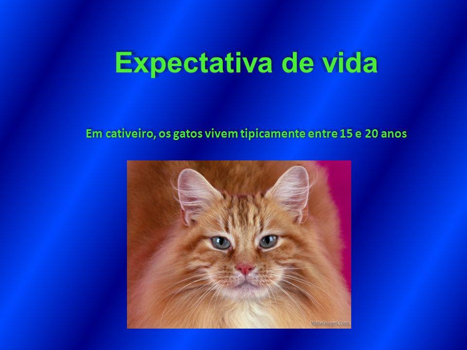 Em cativeiro, os gatos vivem tipicamente entre 15 e 20 anos