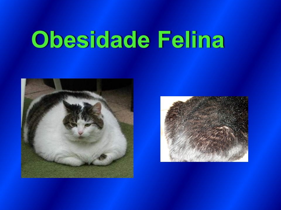 Obesidade Felina