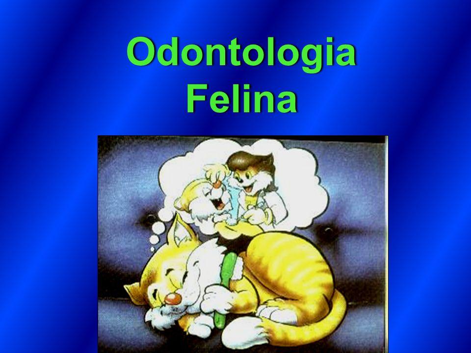 Odontologia Felina feito em