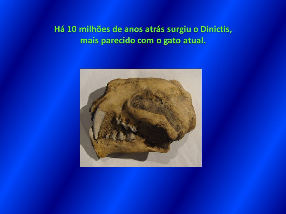 Há 10 milhões de anos atrás surgiu o Dinictis, mais parecido com o gato atual.