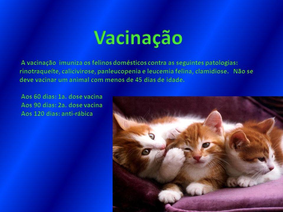 Vacinação.