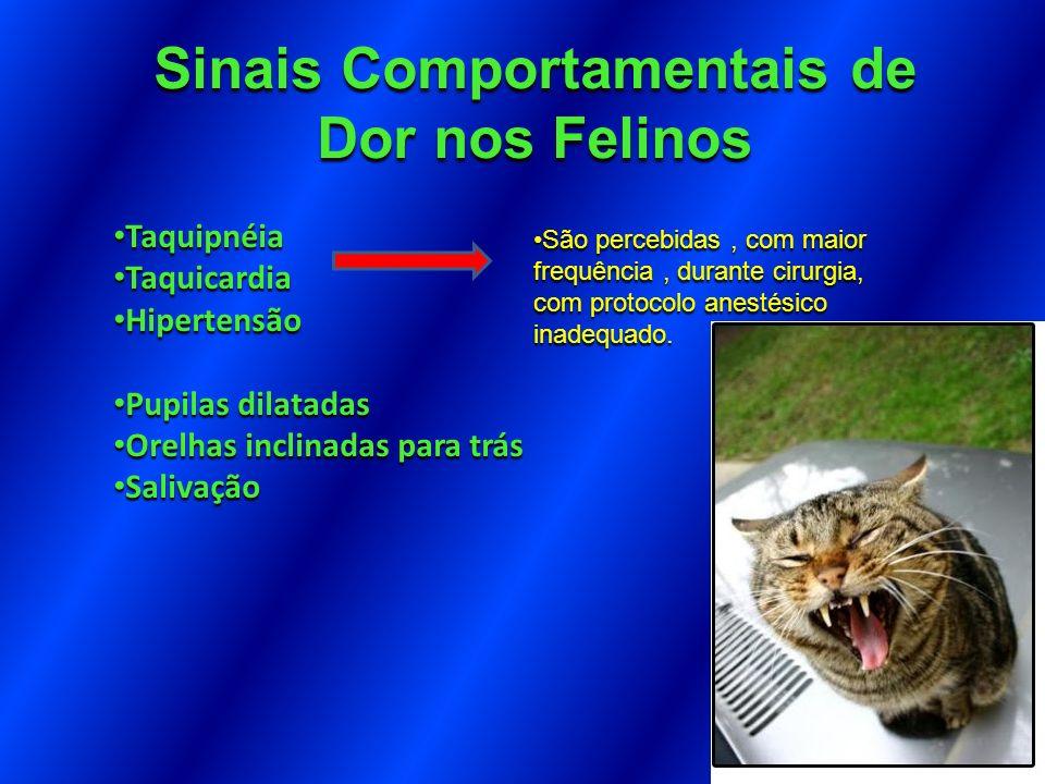 Sinais Comportamentais de Dor nos Felinos