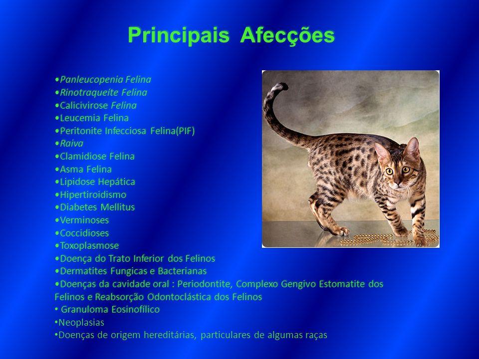 Principais Afecções Panleucopenia Felina Rinotraqueíte Felina