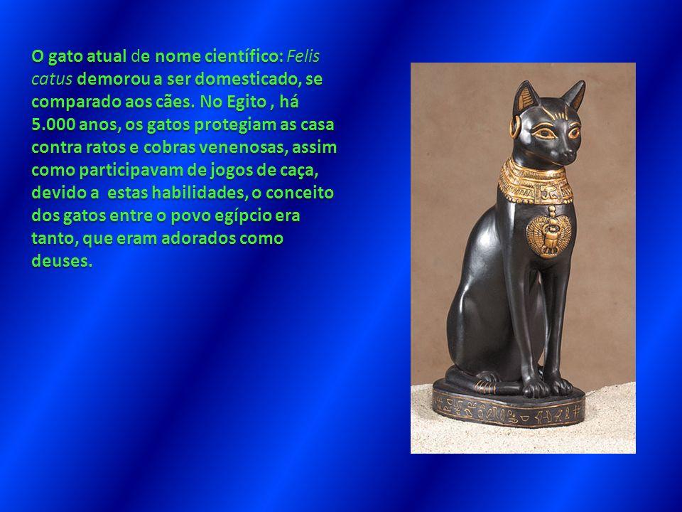 O gato atual de nome científico: Felis catus demorou a ser domesticado, se comparado aos cães.