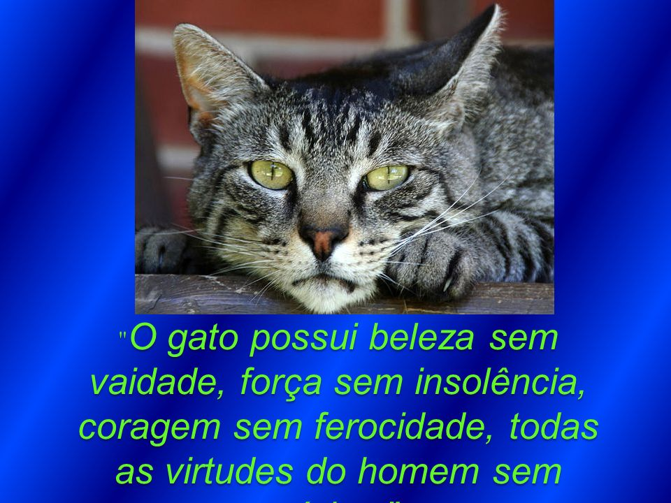 O gato possui beleza sem vaidade, força sem insolência, coragem sem ferocidade, todas as virtudes do homem sem vícios.
