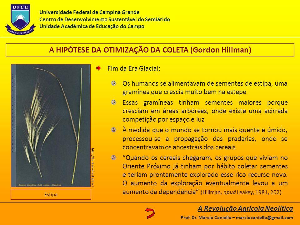 A HIPÓTESE DA OTIMIZAÇÃO DA COLETA (Gordon Hillman)