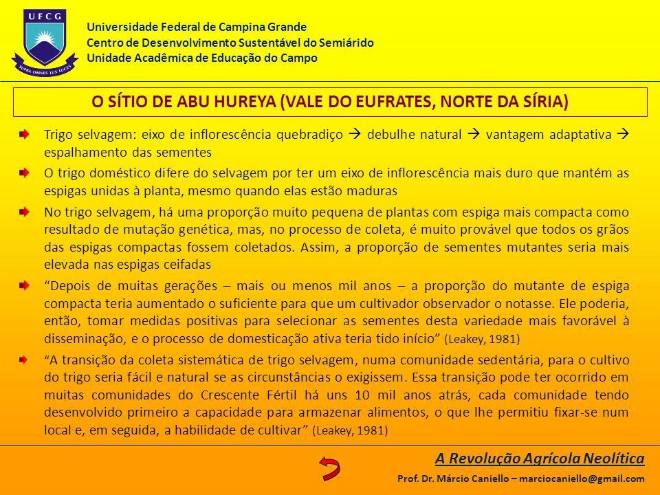 O SÍTIO DE ABU HUREYA (VALE DO EUFRATES, NORTE DA SÍRIA)