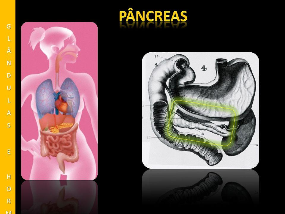 pâncreas GLÂNDULAS E HORMÔNIOS