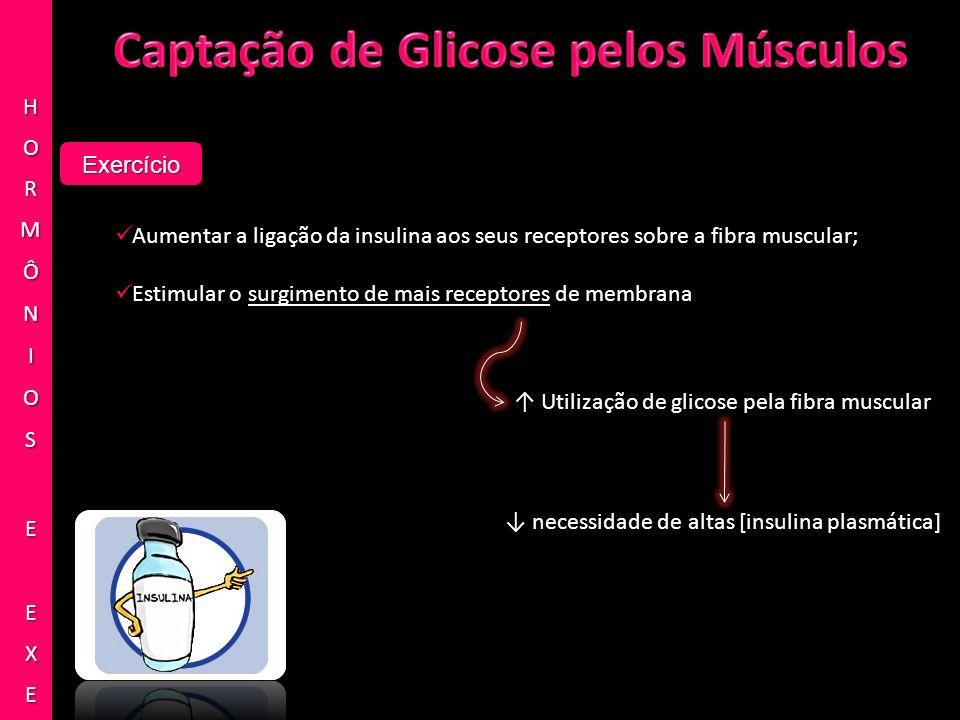 Captação de Glicose pelos Músculos