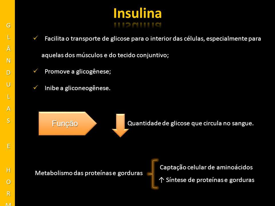 Insulina Função GLÂNDULAS E HORMÔNIOS