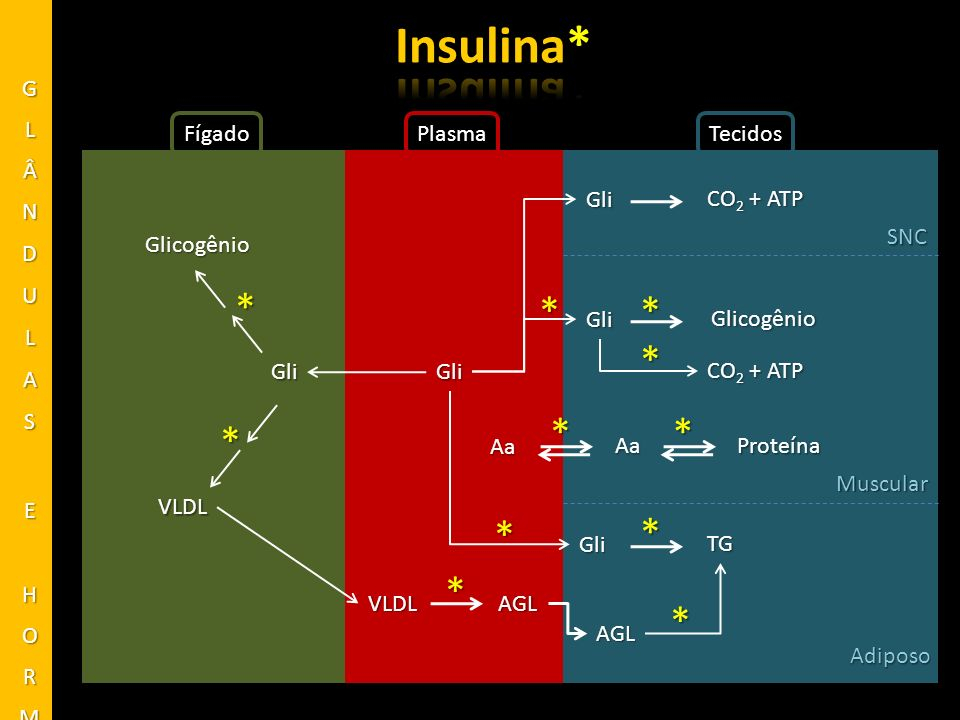 Insulina* * * * * * * * * * * * GLÂNDULAS E HORMÔNIOS Fígado Plasma