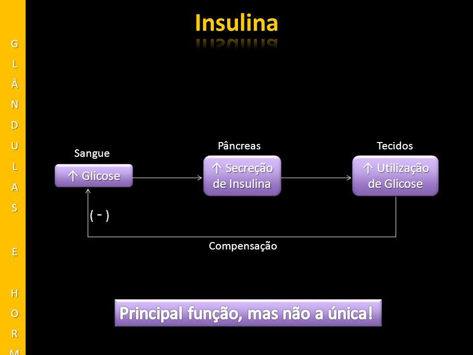 ↑ Utilização de Glicose
