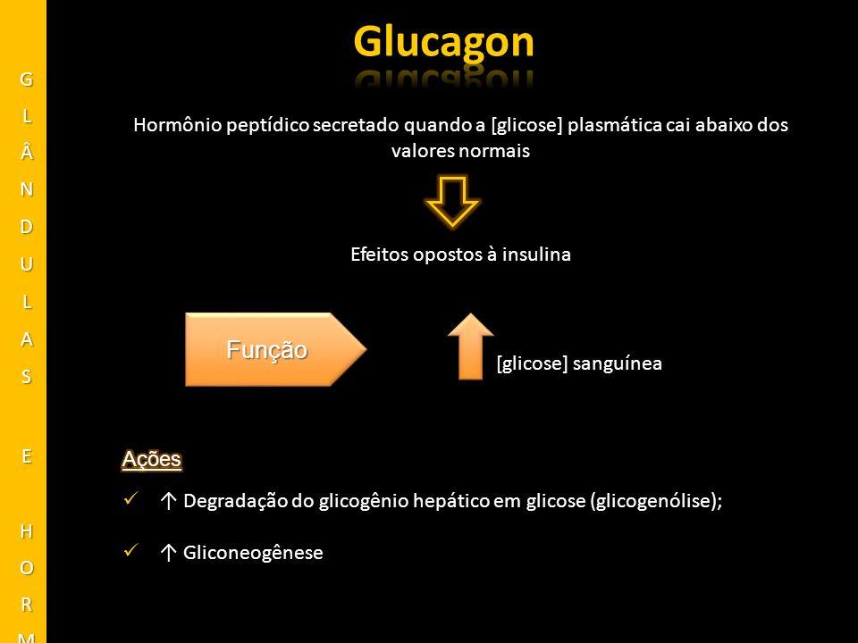 Glucagon Função GLÂNDULAS E HORMÔNIOS