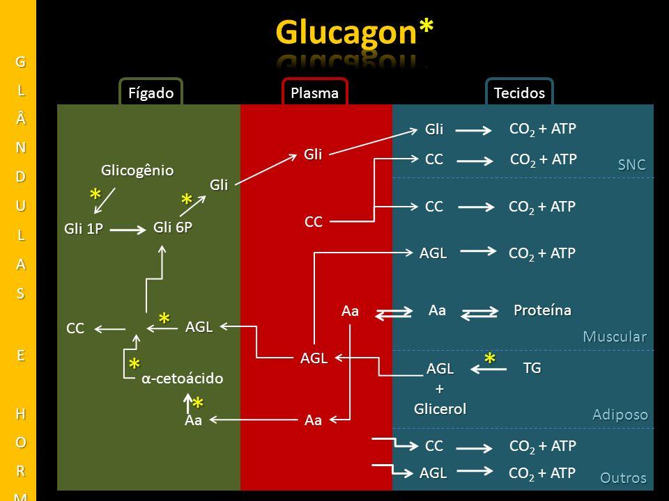 Glucagon* * * * * * * GLÂNDULAS E HORMÔNIOS Fígado Plasma Tecidos Gli
