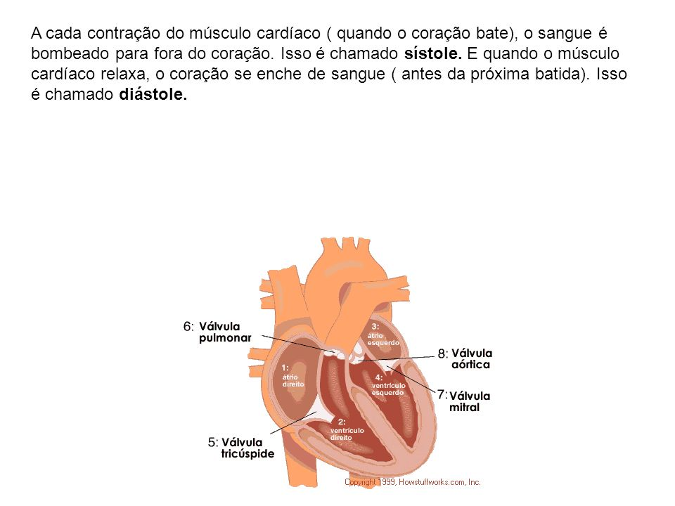 A cada contração do músculo cardíaco ( quando o coração bate), o sangue é bombeado para fora do coração.