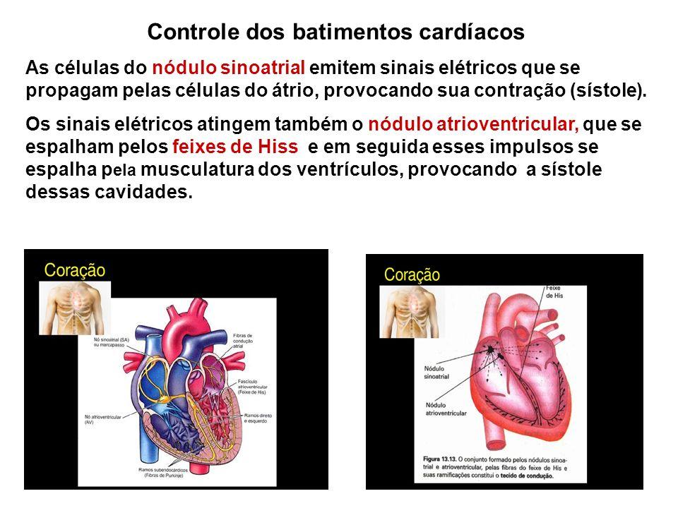 Controle dos batimentos cardíacos