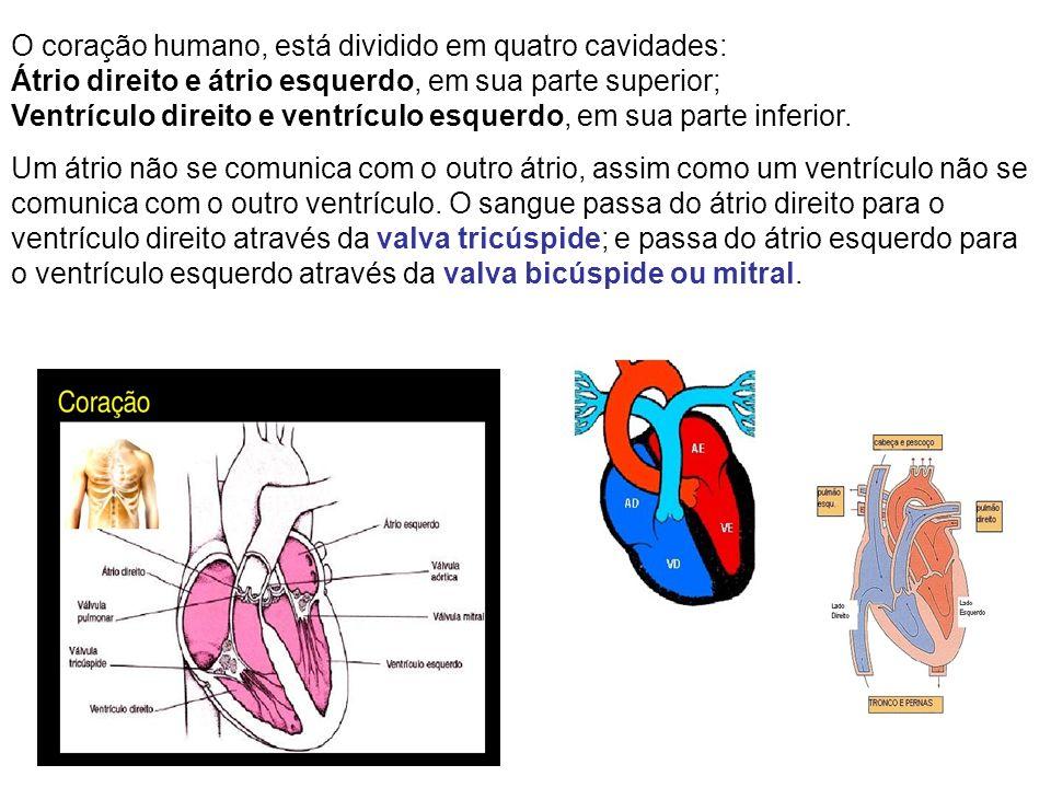 O coração humano, está dividido em quatro cavidades: