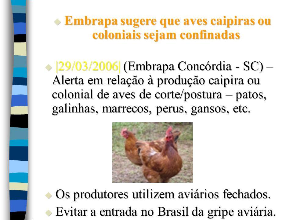 Embrapa sugere que aves caipiras ou coloniais sejam confinadas