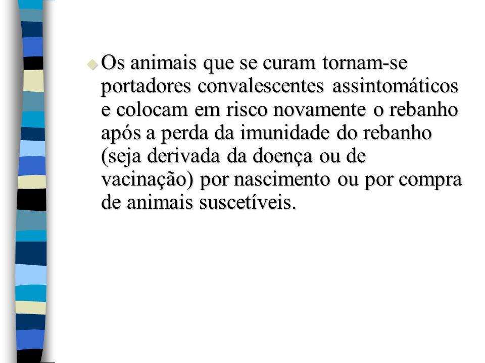 Os animais que se curam tornam-se portadores convalescentes assintomáticos e colocam em risco novamente o rebanho após a perda da imunidade do rebanho (seja derivada da doença ou de vacinação) por nascimento ou por compra de animais suscetíveis.