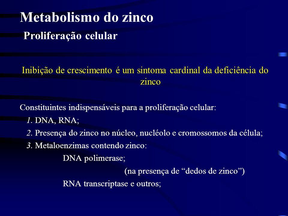 Metabolismo do zinco Proliferação celular