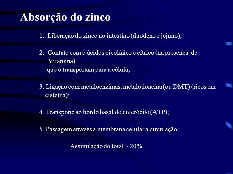 Absorção do zinco 1. Liberação do zinco no intestino (duodeno e jejuno); 2. Contato com o ácidos picolínico e cítrico (na presença de.